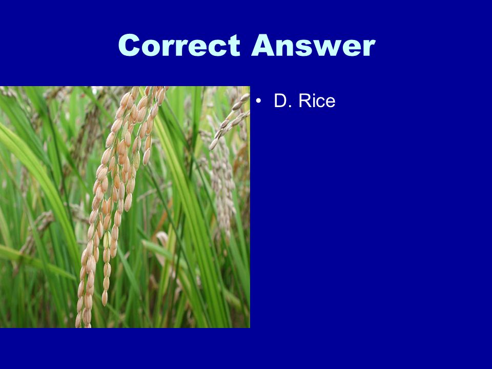 Correct Answer D. Rice