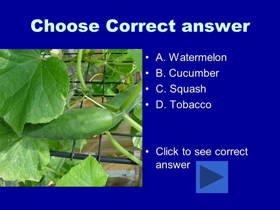 Choose Correct answer A. Watermelon B. Cucumber C. Squash D. Tobacco Click to see correct answer