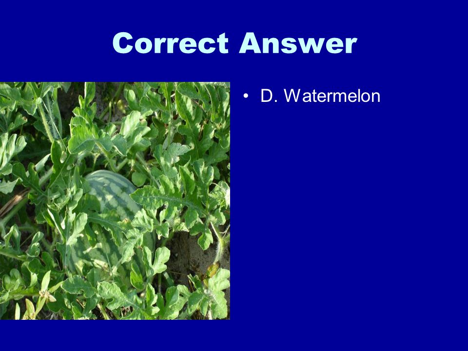 Correct Answer D. Watermelon