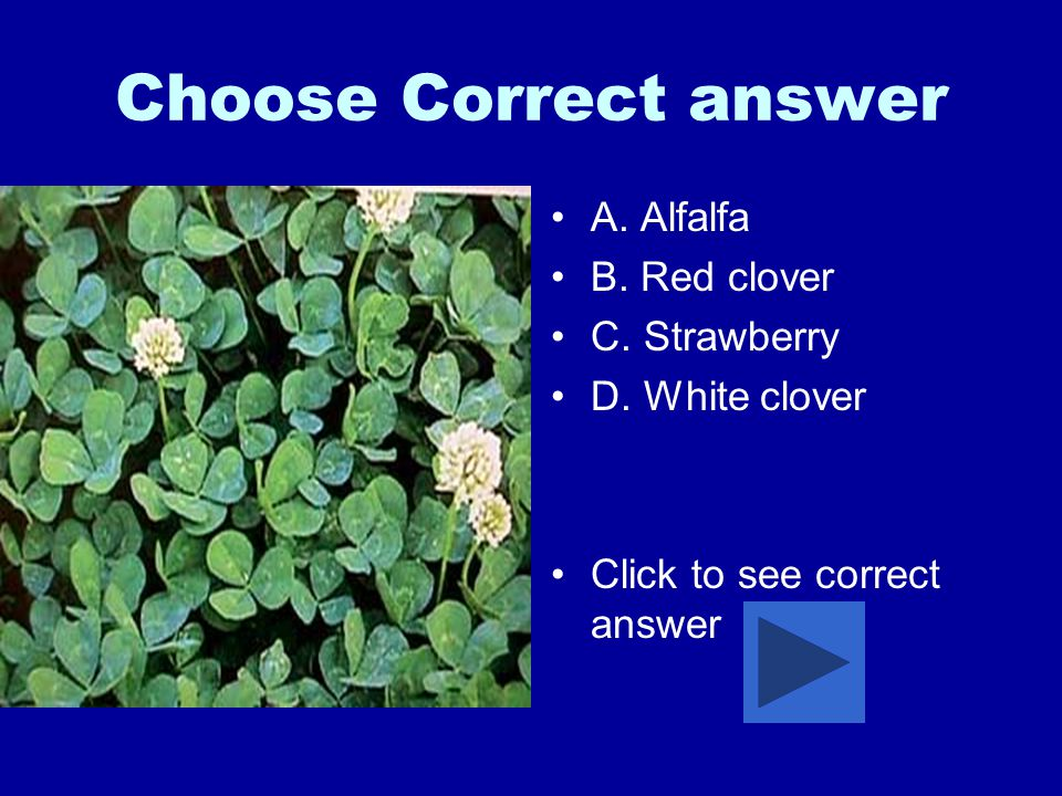 Choose Correct answer A. Alfalfa B. Red clover C.