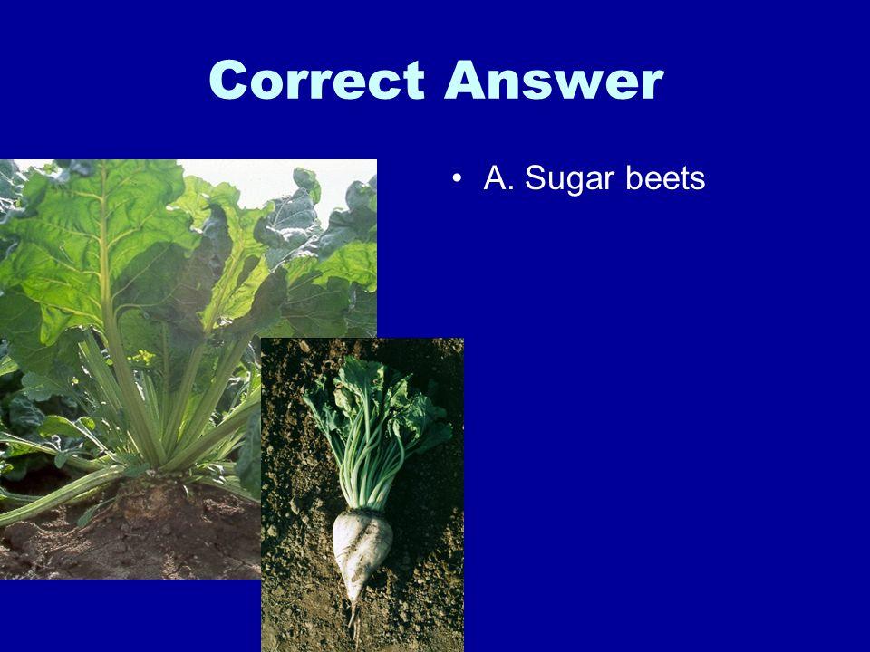 Correct Answer A. Sugar beets