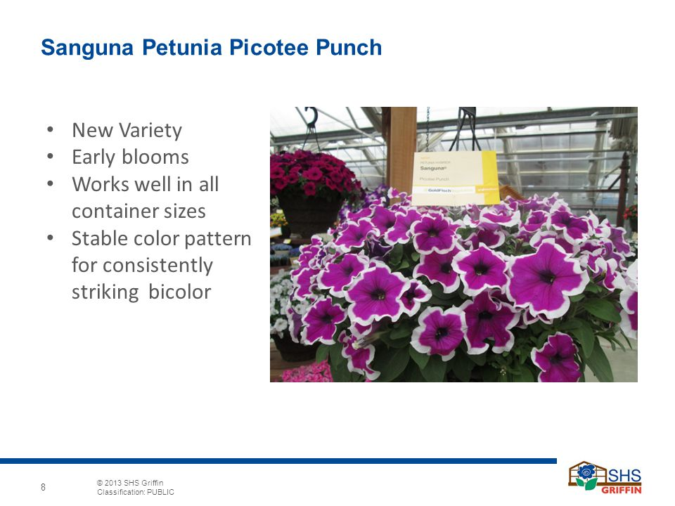 © 2013 SHS Griffin Classification: PUBLIC 8 Sanguna Petunia Picotee Punch New Variety Early blooms Works well in all container sizes Stable color pattern for consistently striking bicolor