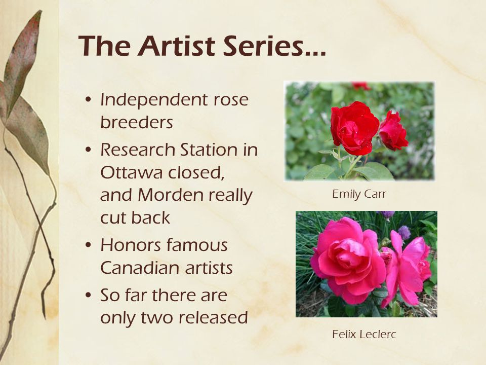The Artist Series… Independent rose breeders Research Station in Ottawa closed, and Morden really cut back Honors famous Canadian artists So far there are only two released Emily Carr Felix Leclerc