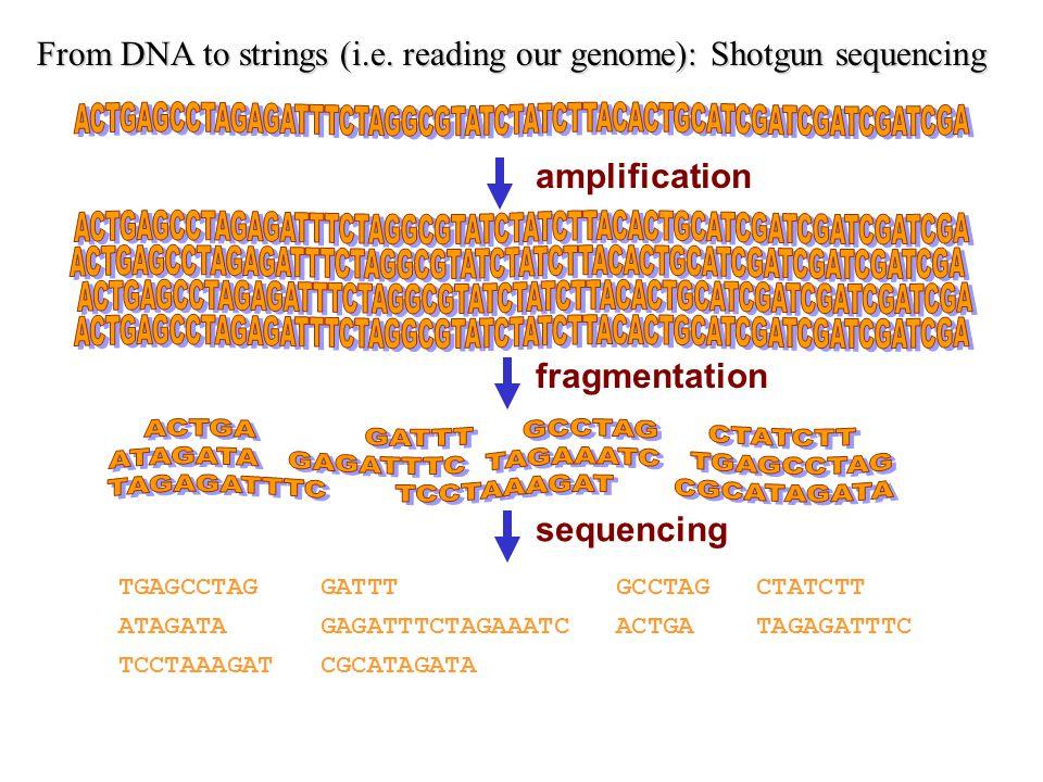 TGAGCCTAG GATTT GCCTAG CTATCTT ATAGATA GAGATTTCTAGAAATC ACTGA TAGAGATTTC TCCTAAAGAT CGCATAGATA fragmentation sequencing From DNA to strings (i.e.