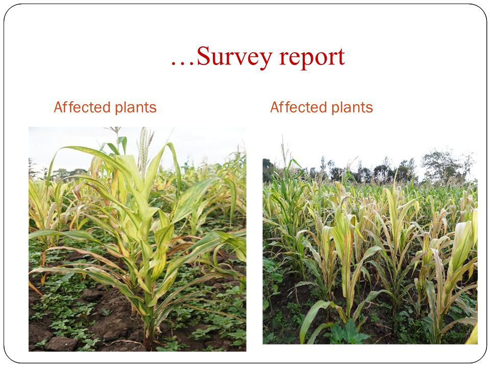 …Survey report Affected plants