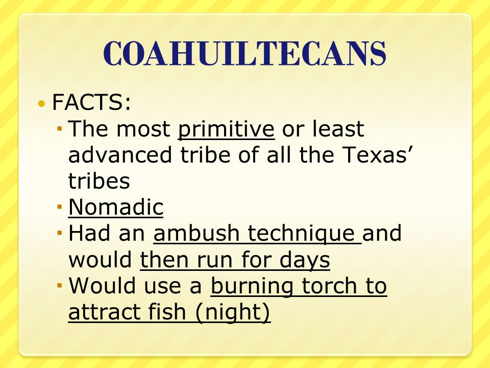 COAHUILTECANS FACTS:  The most primitive or least advanced tribe of all the Texas' tribes  Nomadic  Had an ambush technique and would then run for