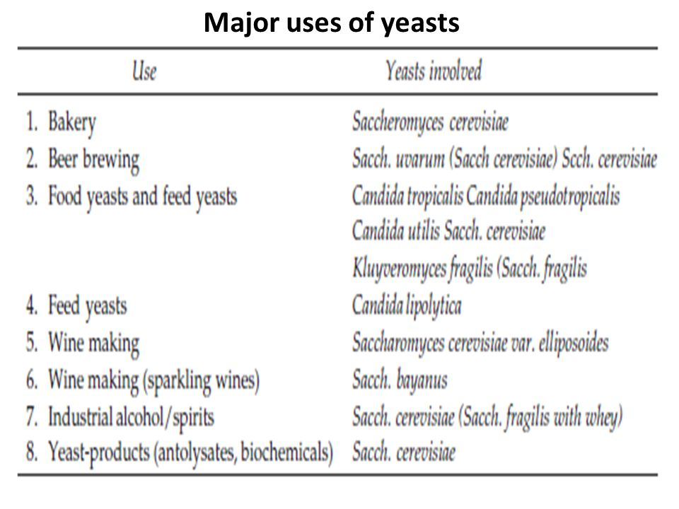 Major uses of yeasts