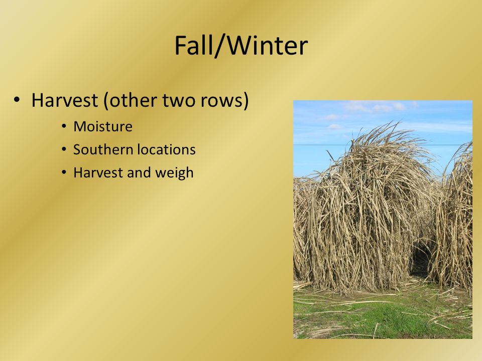 Fall/Winter Harvest (other two rows) Moisture Southern locations Harvest and weigh
