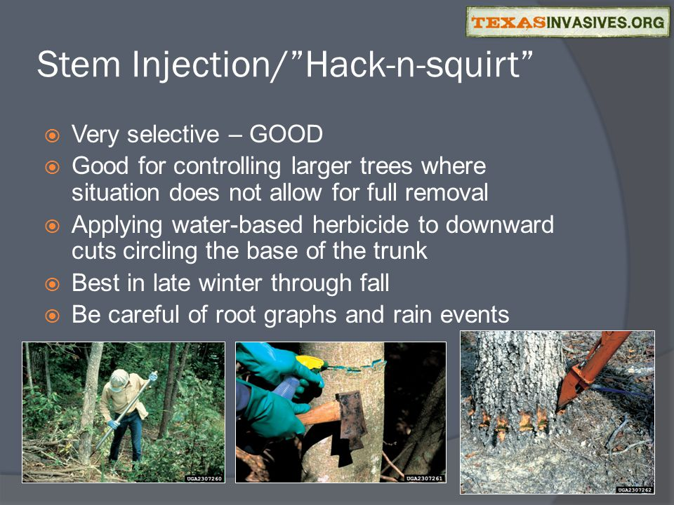 Stem Injection/ Hack-n-squirt  Very selective – GOOD  Good for controlling larger trees where situation does not allow for full removal  Applying water-based herbicide to downward cuts circling the base of the trunk  Best in late winter through fall  Be careful of root graphs and rain events