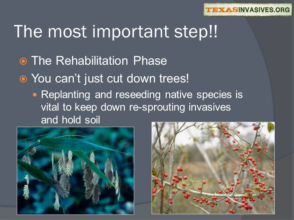 The most important step!.  The Rehabilitation Phase  You can't just cut down trees.