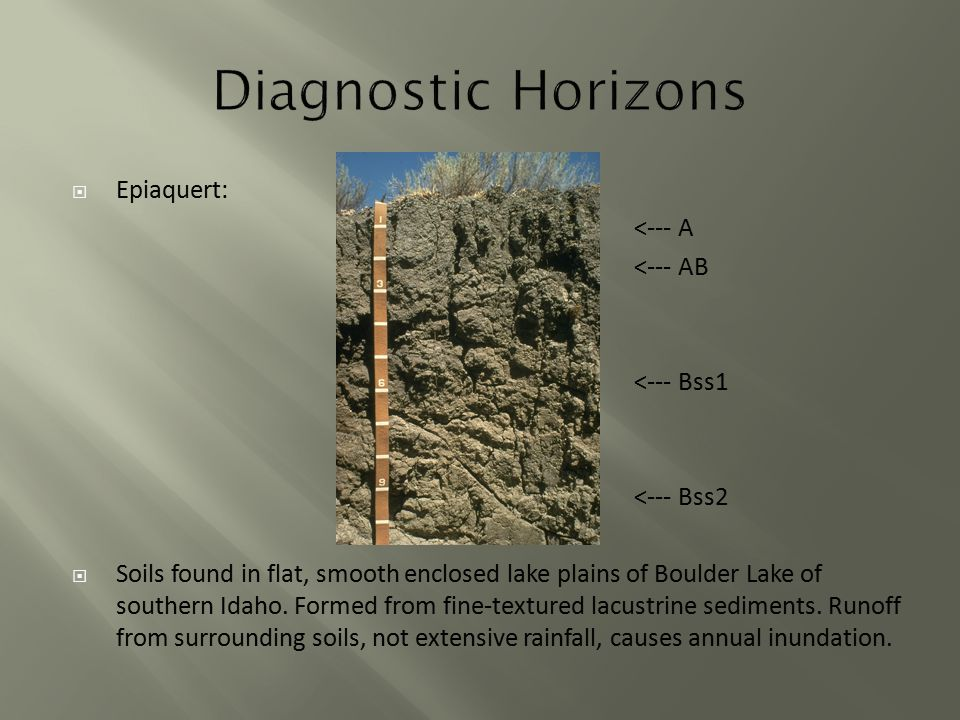  Epiaquert: <--- A <--- AB <--- Bss1 <--- Bss2  Soils found in flat, smooth enclosed lake plains of Boulder Lake of southern Idaho.