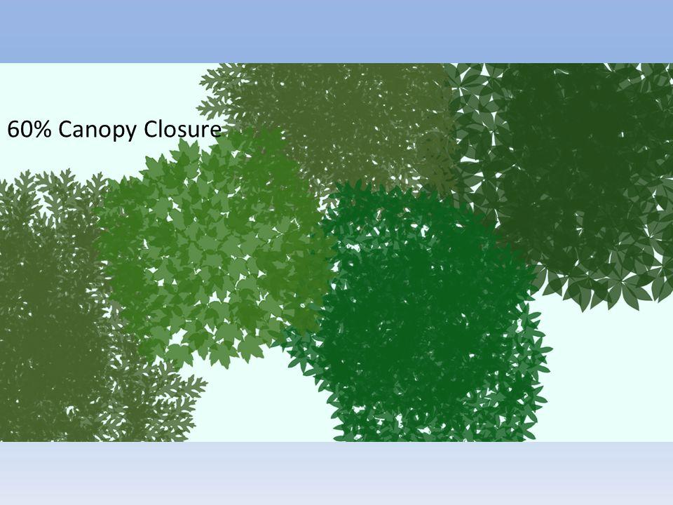 60% Canopy Closure