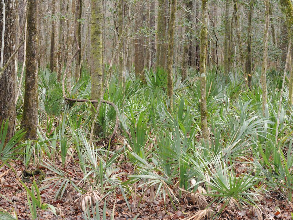 Typical Hardwood Management Historically we've left as is… or done large harvests followed by natural regeneration