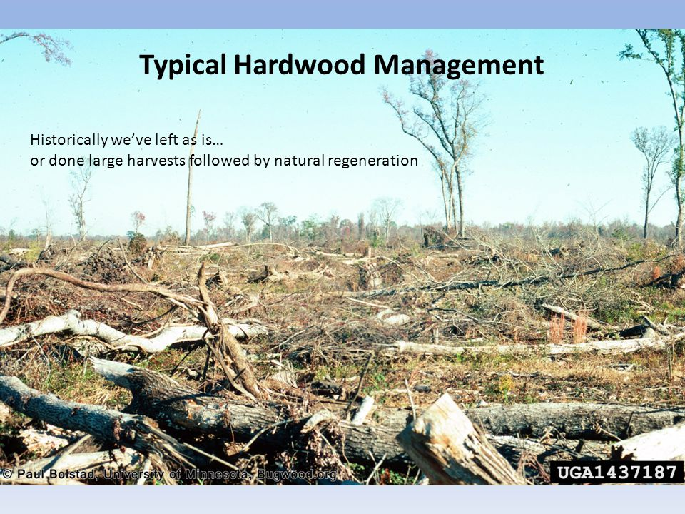 Small Patch Clearcut 2-10 acres with <10% of entire bottomland in regenerative state Feathered edges necessary if thinning does not accompany clearing