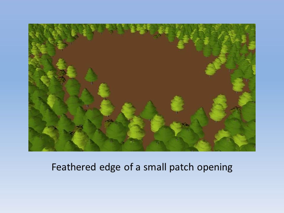 Feathered edge of a small patch opening