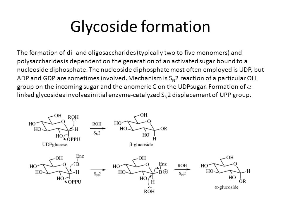 Glycoside formation The formation of di- and oligosaccharides (typically two to five monomers) and polysaccharides is dependent on the generation of an activated sugar bound to a nucleoside diphosphate.