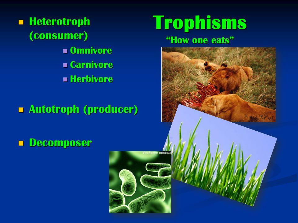 Trophisms How one eats Heterotroph (consumer) Heterotroph (consumer) Omnivore Omnivore Carnivore Carnivore Herbivore Herbivore Autotroph (producer) Autotroph (producer) Decomposer Decomposer