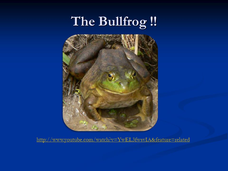 The Bullfrog !! http://www.youtube.com/watch?v=YwEL3fwsvIA&feature=related