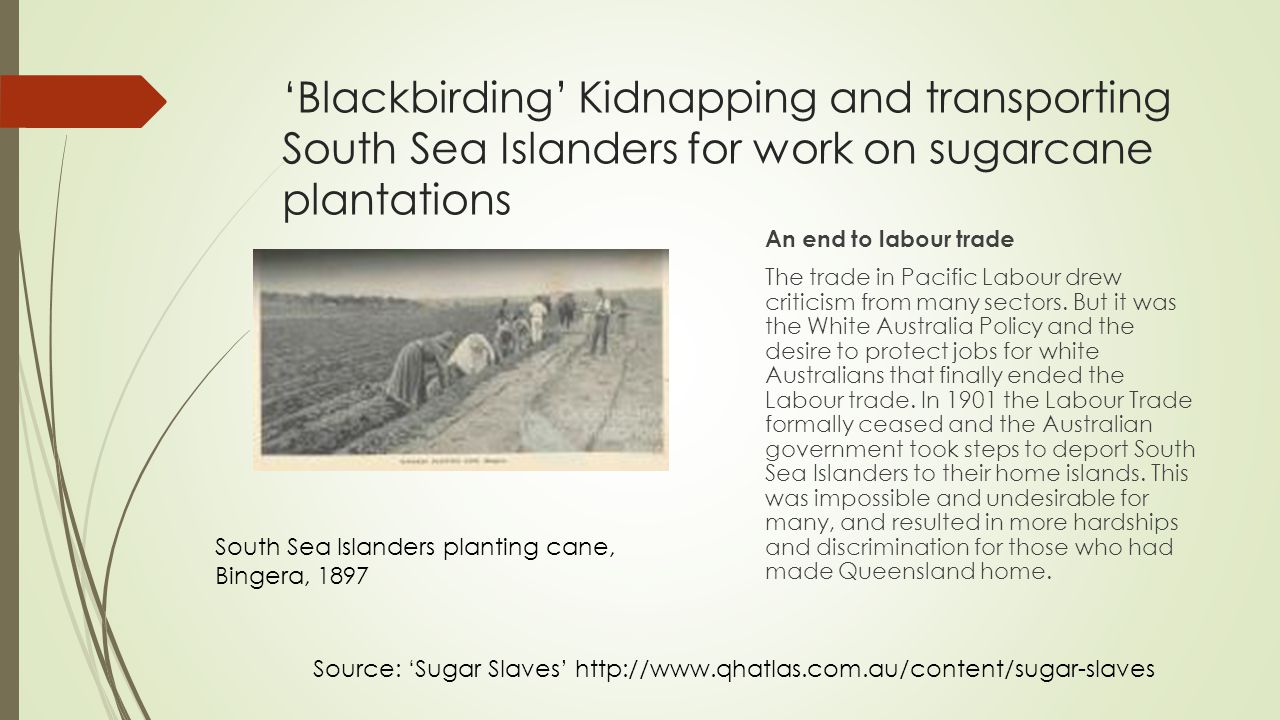'Blackbirding' Kidnapping and transporting South Sea Islanders for work on sugarcane plantations An end to labour trade The trade in Pacific Labour dr