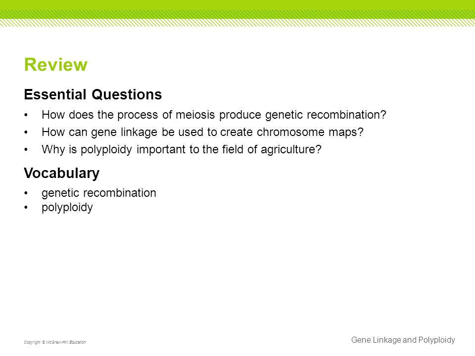 Gene Linkage and Polyploidy Copyright © McGraw-Hill Education Review Essential Questions How does the process of meiosis produce genetic recombination.