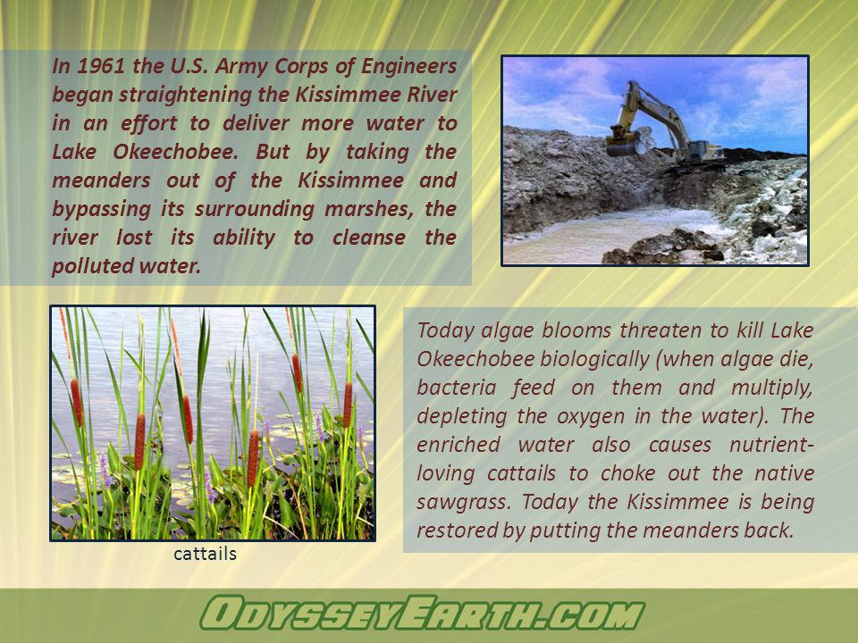 In 1961 the U.S. Army Corps of Engineers began straightening the Kissimmee River in an effort to deliver more water to Lake Okeechobee. But by taking
