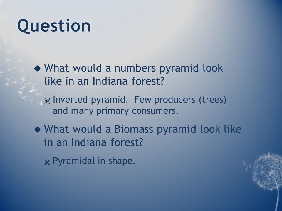 Question  What would a numbers pyramid look like in an Indiana forest.