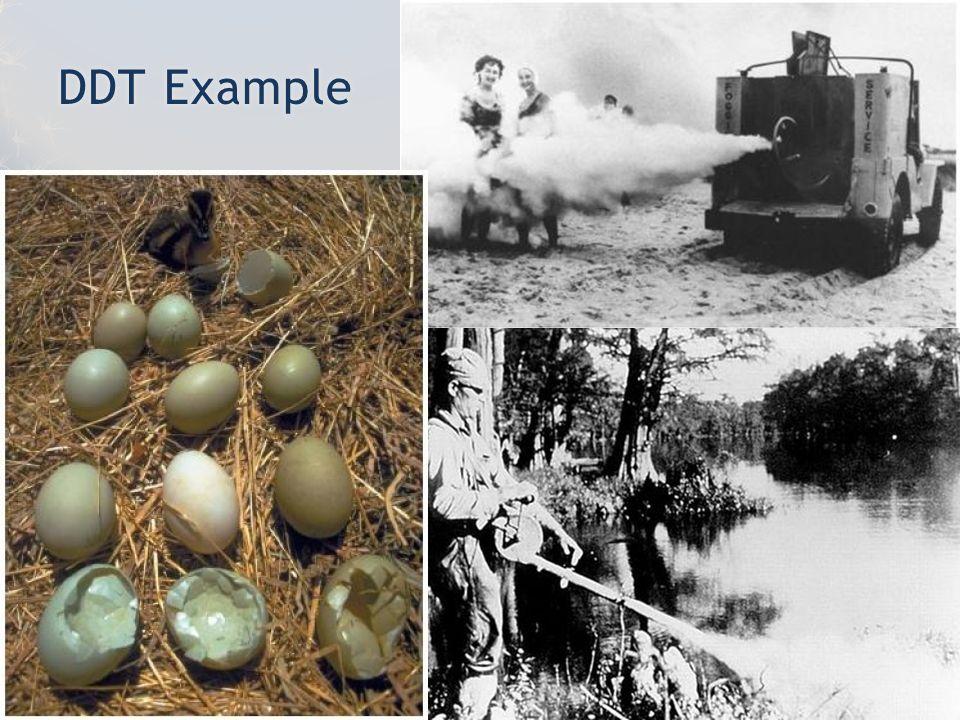 DDT ExampleDDT Example