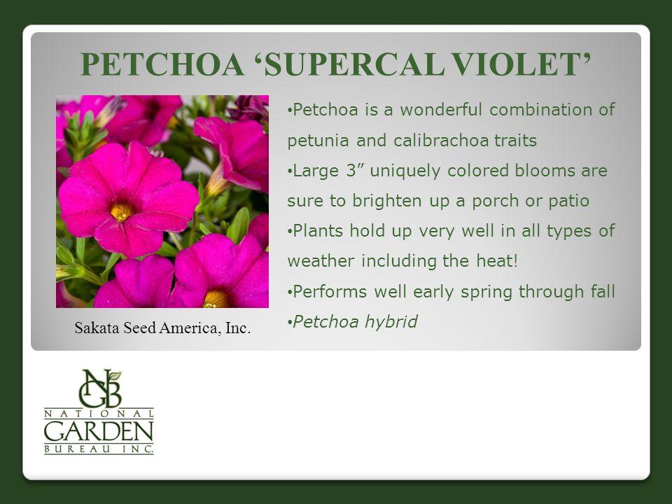 "PETCHOA 'SUPERCAL VIOLET' Sakata Seed America, Inc. Petchoa is a wonderful combination of petunia and calibrachoa traits Large 3"" uniquely colored blo"