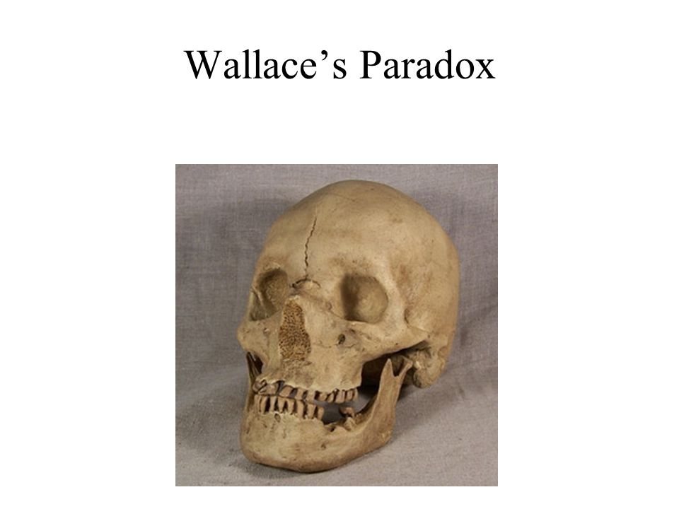 One Possible Answer to Wallace's Paradox: Exaptationism Our ancestors from a hundreds of thousand years ago *did* need big brains.