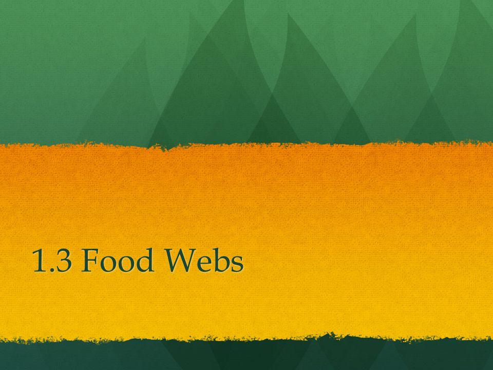 1.3 Food Webs