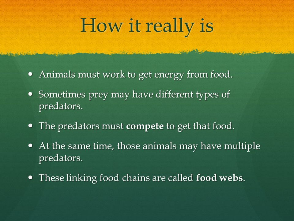 How it really is Animals must work to get energy from food.