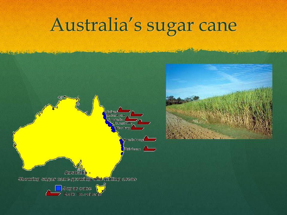 Australia's sugar cane