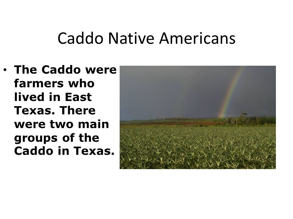 Caddo Native Americans The Caddo were farmers who lived in East Texas.
