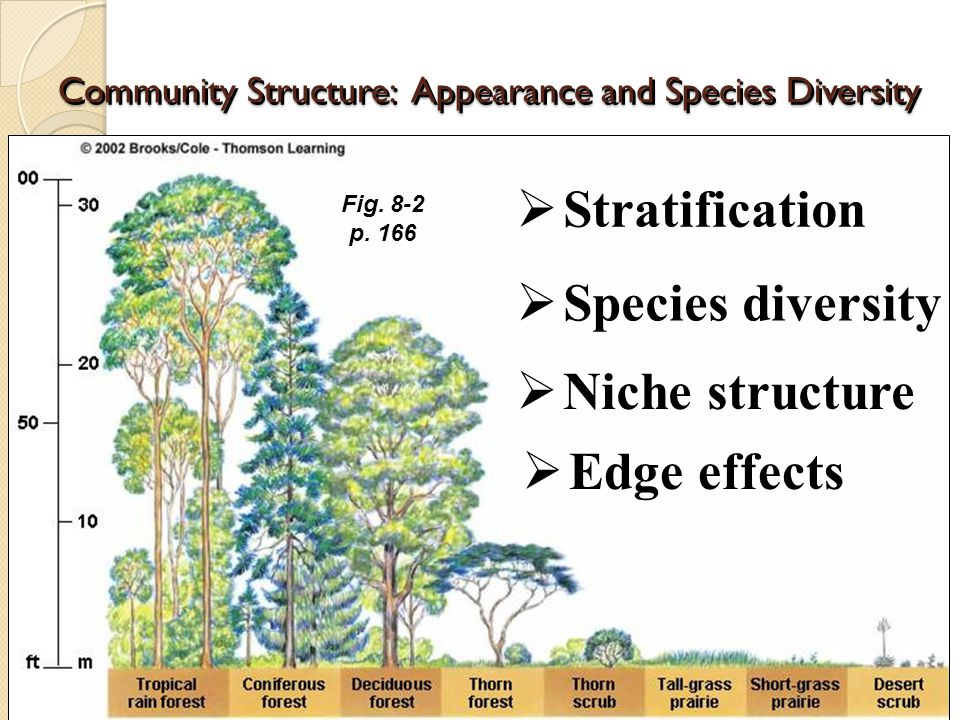 Community Structure: Appearance and Species Diversity  Stratification  Species diversity  Niche structure  Edge effects Fig.