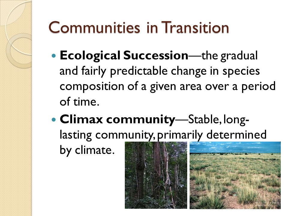 Communities in Transition Ecological Succession—the gradual and fairly predictable change in species composition of a given area over a period of time.