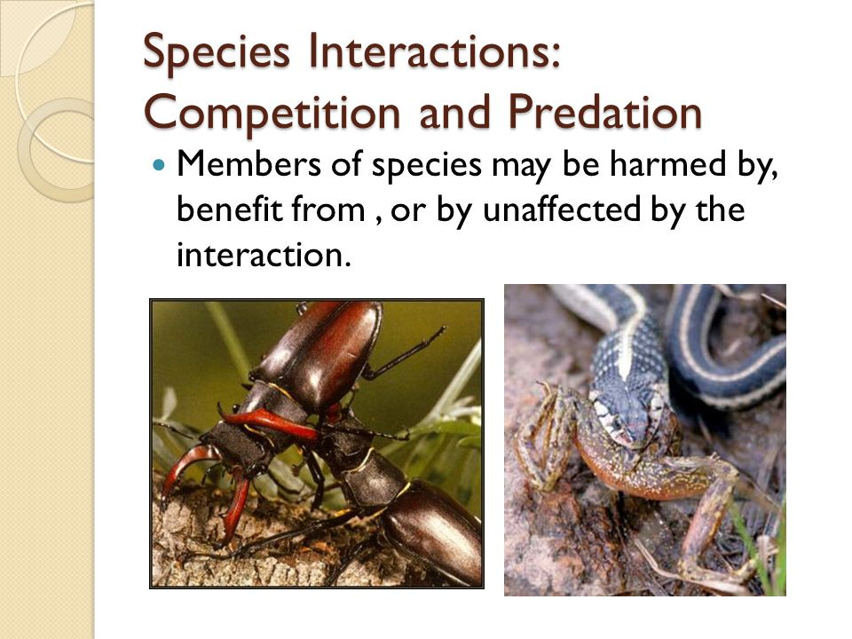 Species Interactions: Competition and Predation Members of species may be harmed by, benefit from, or by unaffected by the interaction.