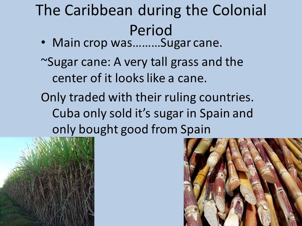 The Caribbean during the Colonial Period Main crop was………Sugar cane.