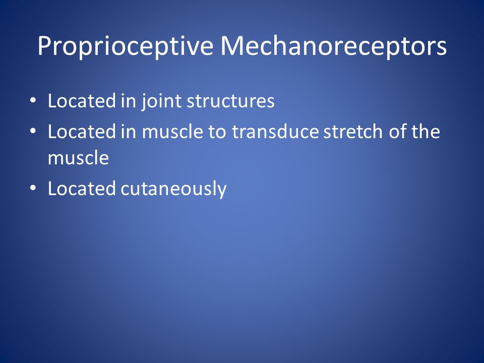 Proprioceptive Mechanoreceptors Located in joint structures Located in muscle to transduce stretch of the muscle Located cutaneously