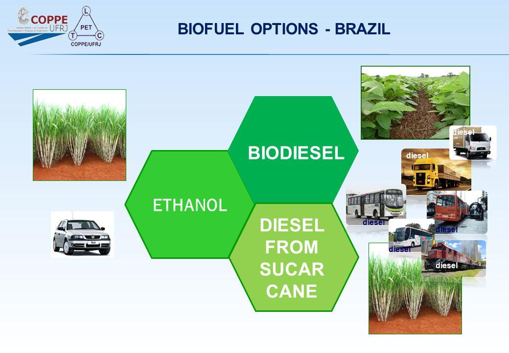 BIOFUEL OPTIONS - BRAZIL ETHANOL BIODIESEL DIESEL FROM SUCAR CANE diesel