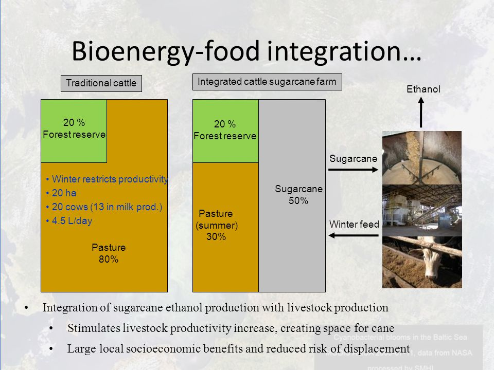 Integration of sugarcane ethanol production with livestock production Stimulates livestock productivity increase, creating space for cane Large local socioeconomic benefits and reduced risk of displacement Bioenergy-food integration… Traditional cattle 20 % Forest reserve Pasture 80% Integrated cattle sugarcane farm 20 % Forest reserve Pasture (summer) 30% Sugarcane 50% Winter restricts productivity 20 ha 20 cows (13 in milk prod.) 4.5 L/day Sugarcane Winter feed Ethanol