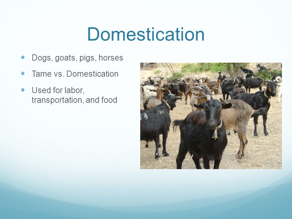 Domestication Dogs, goats, pigs, horses Tame vs.