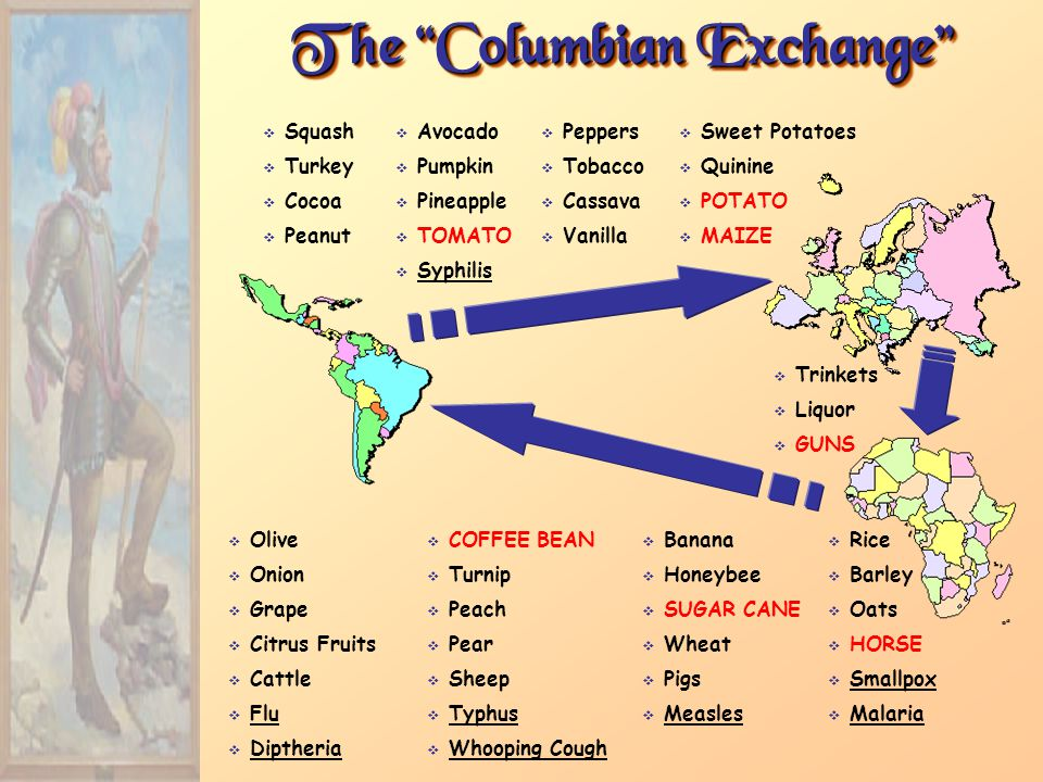 The Columbian Exchange  Squash  Avocado  Peppers  Sweet Potatoes  Turkey  Pumpkin  Tobacco  Quinine  Cocoa  Pineapple  Cassava  POTATO  Peanut  TOMATO  Vanilla  MAIZE  Syphilis  Olive  COFFEE BEAN  Banana  Rice  Onion  Turnip  Honeybee  Barley  Grape  Peach  SUGAR CANE  Oats  Citrus Fruits  Pear  Wheat  HORSE  Cattle  Sheep  Pigs  Smallpox  Flu  Typhus  Measles  Malaria  Diptheria  Whooping Cough  Trinkets  Liquor  GUNS