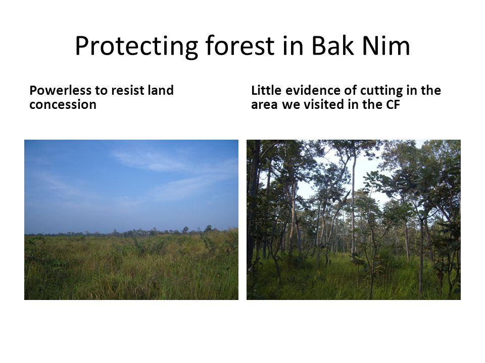 Protecting forest in Bak Nim Powerless to resist land concession Little evidence of cutting in the area we visited in the CF