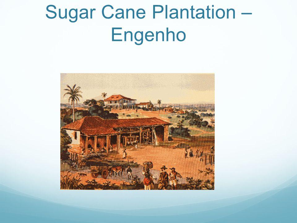 Sugar Cane Plantation – Engenho