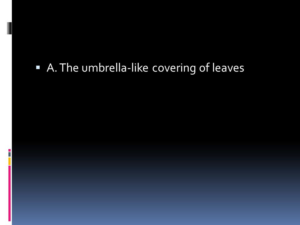  A. The umbrella-like covering of leaves