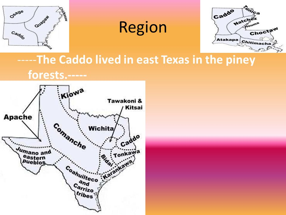 Region -----The Caddo lived in east Texas in the piney forests.-----