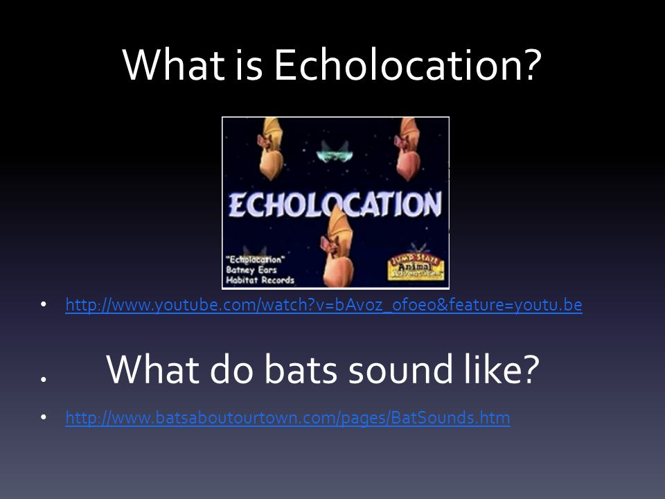 What is Echolocation? http://www.youtube.com/watch?v=bAvoz_ofoeo&feature=youtu.be http://www.batsaboutourtown.com/pages/BatSounds.htm What do bats sou