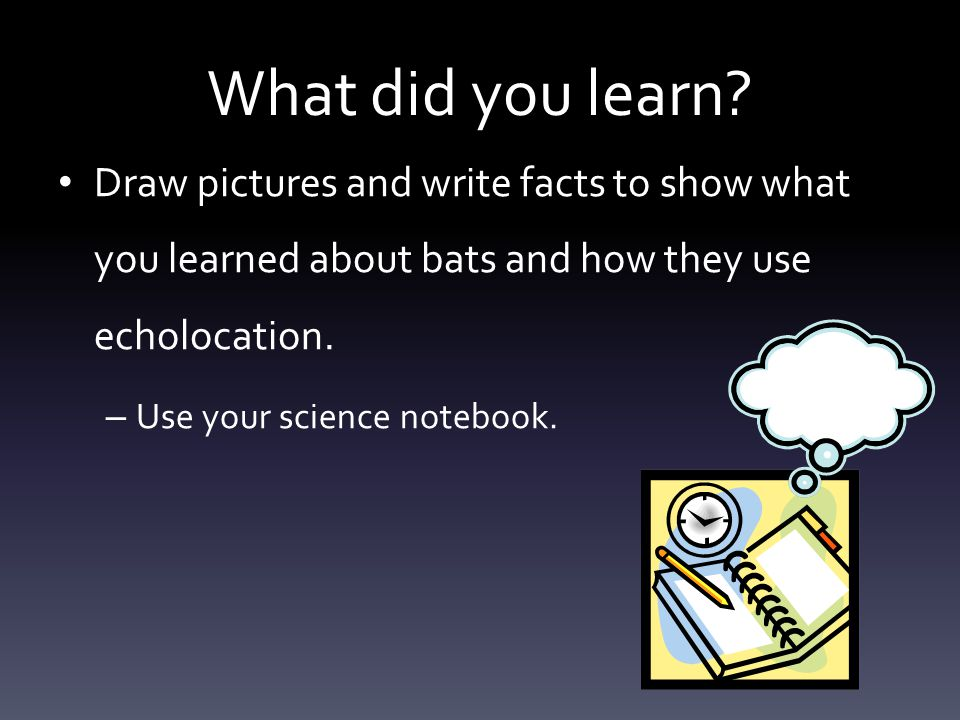 What did you learn? Draw pictures and write facts to show what you learned about bats and how they use echolocation. – Use your science notebook.