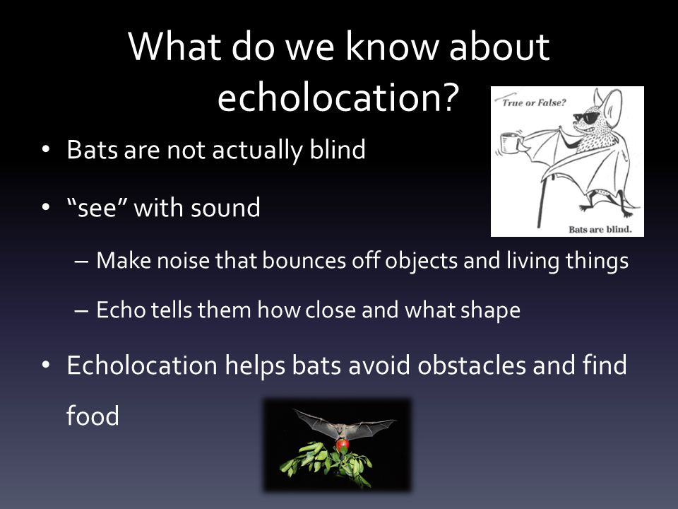 What do we know about echolocation.