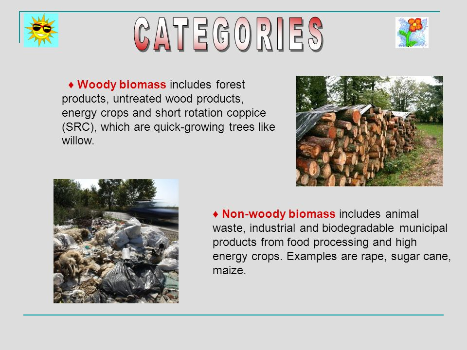 ♦ Woody biomass includes forest products, untreated wood products, energy crops and short rotation coppice (SRC), which are quick-growing trees like willow.